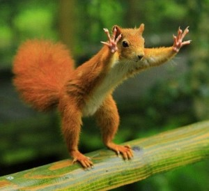 Squirrel-Wants-Our-Attention-e1333540108800.jpg-1